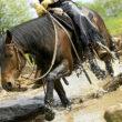 zapůjčeno z http://www.cavallo.de/training-fuers-pferd/extreme-trail-park-geschicklichkeits-training-fuer-pferde-im-gelaende.663207.233219.htm